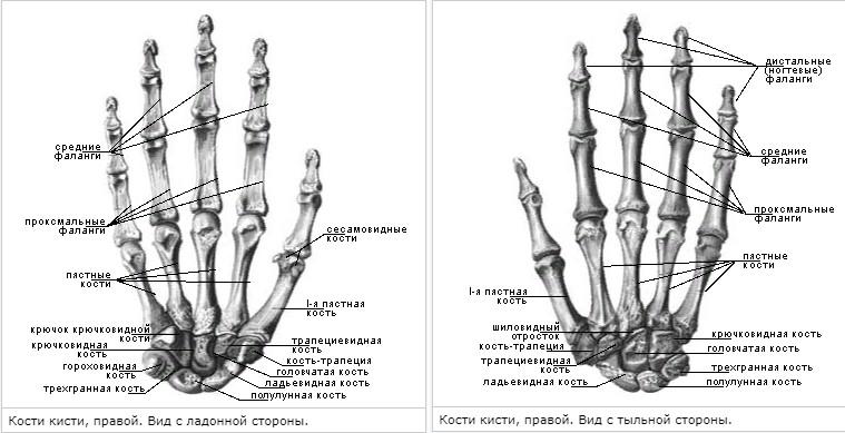 Что такое Finger fitness