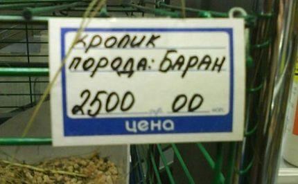ARTиШОК. Конкурс дурацкой рекламы