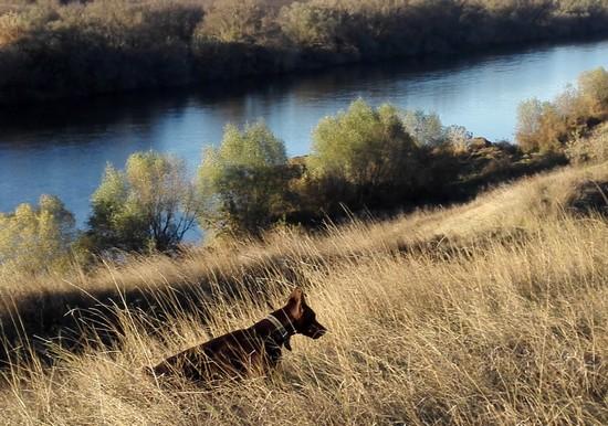 прогулки у речки Быстрая Сосна
